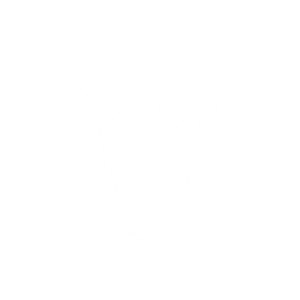 The Healing Space white lotus silhouette